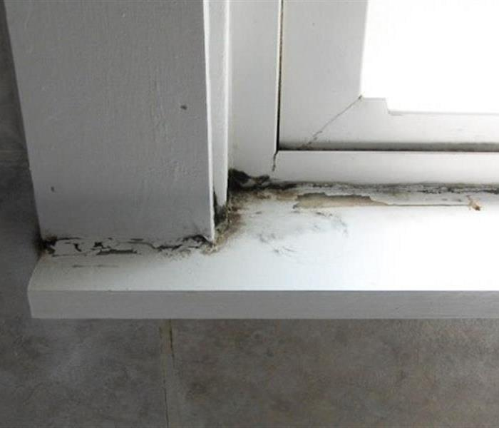 Mold Remediation Maintain your Nashville home during winter to prevent mold damage