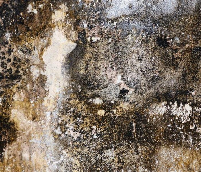 Mold Remediation Be Prepared to Handle Mold in Your Nashville Home